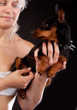 Dog in hands Royalty Free Stock Image