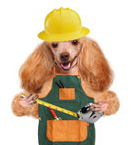 Dog handyman Stock Image