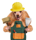 Dog handyman Stock Images