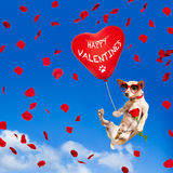 Dog hanging on balloon in  air for valentines day Stock Photo