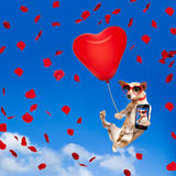Dog hanging on balloon in  air for valentines day Royalty Free Stock Photos