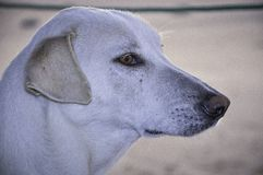 Dog. Happily listened stray dogs in the desert Royalty Free Stock Photography