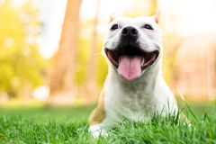 Dog happiness stock photo