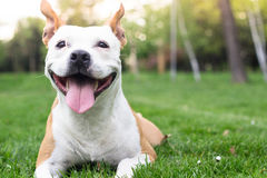 Dog happiness. Smiling happiness dog joy in the park royalty free stock photography