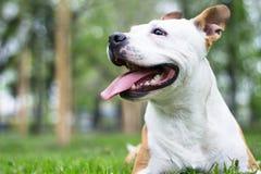 Dog happiness stock photos
