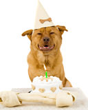 Dog Happy Birthday. Dog with Birthday cake and bone on a white background Stock Photography