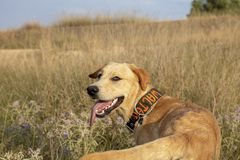 Happy dog in the nature royalty free stock photography
