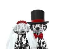 Dog happy wedding. Isolated on white. Background Stock Photos