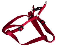 Dog harness Royalty Free Stock Image