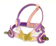 Dog harness Royalty Free Stock Photo