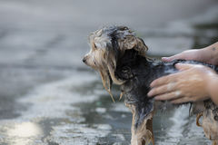 A dog that has been bathing Stock Images