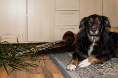 Dog has done something Royalty Free Stock Photos