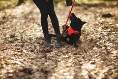The dog has fun with her owner in the autumn park royalty free stock image