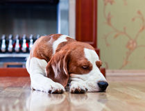 The dog has a rest near to a fireplace Stock Photo