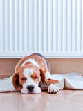 Dog has a rest near to a warm radiator stock photo