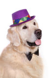 Dog with hat. Golden retriever dog with hat and bow tie on white background Stock Photos