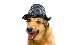 Dog in a hat Stock Photo