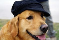 Dog with a hat Stock Photos