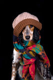 Dog with hat. Dog with bonnet seems to be ready to face the cold winter days Stock Image
