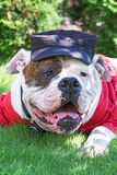 Dog in hat and closes Stock Image