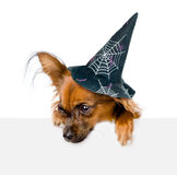 Dog with hat for halloween above white banner looking down.  on white background.  Royalty Free Stock Image