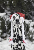 Dog in a hat of Santa Claus in the forest Royalty Free Stock Photos