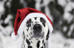 Dog in a hat of Santa Claus in the forest Royalty Free Stock Photography