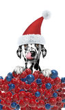 Dog in a hat of Santa Claus with xmas balls background Stock Images