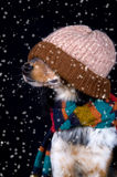 Dog with hat in snow. This dog is all prepared for winter royalty free stock image