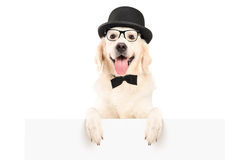 A dog with hat standing behind a white panel Royalty Free Stock Photos