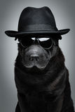 Dog in hat and sunglasses Stock Photography