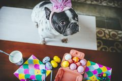 Dog with hat on table full of Easter eggs Stock Photo