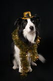 A dog in hat and tinsel Stock Image