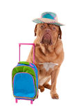 Dog with hat and travel bag Royalty Free Stock Images