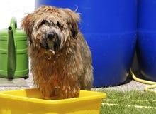 Dog having a bath Royalty Free Stock Photos