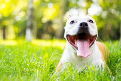 Dog having a big smile Royalty Free Stock Images
