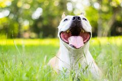 Dog having a big smile Stock Photo