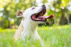 Dog having a big smile Stock Photography