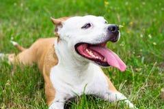 Dog having a big smile Stock Photography