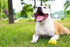 Dog having a big smile Royalty Free Stock Photos