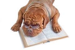 Dog having a break Stock Images