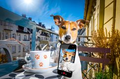 Dog having a coffee break and selfie Royalty Free Stock Images