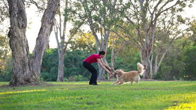 Dog having fun and fetching a stick in the park. With woman stock video