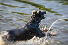 Dog having fun in a river Stock Photos