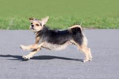 Dog having fun Stock Images