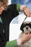 Dog having hair cut Royalty Free Stock Photo