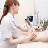 Dog having ultrasound scan in vet office Royalty Free Stock Photo