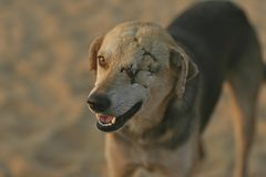 DOG HD BLUR LANDSCAPE WINTER EYES FULL BLURR stock photos