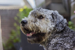 Dog. A head of a dog Royalty Free Stock Photography
