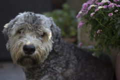 Dog. A head of a dog Stock Photo